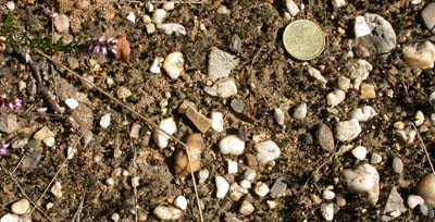 Gravel in the soil of Heumensoord