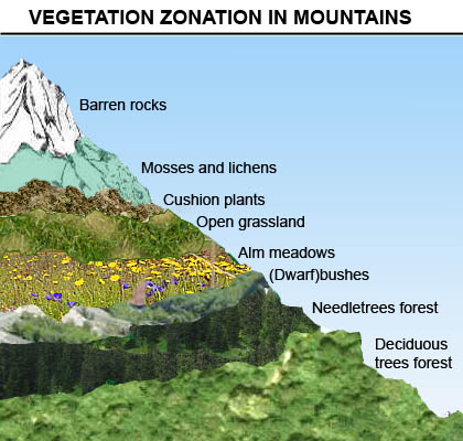 Vertical vegetation zonation along a moutain slope
