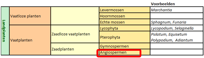 classificatie Angiospermen