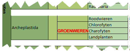 classificatie groenwieren