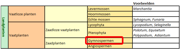 classificatie Gymnospermen