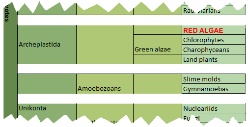 classification red algae